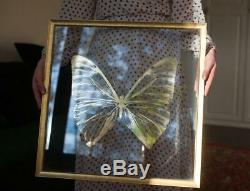 Butterfly wall decor. Handmade. Gold-color foil