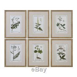 Uttermost 33651 Wall Art Green Floral Botanical Study Gold Leaf