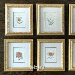 Vintage Framed Botanical Wall Art Decor Prints Set Of 8 Gold Framed